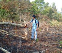 Hàng trăm người dân chặt phá rừng trái phép