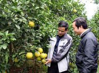Nghệ An sẽ có thêm 34 xã đạt nông thôn mới