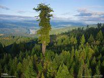 Phát hiện thú vị về cây xanh cao nhất thế giới