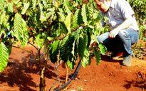 Tưới nước tiết kiệm: Người trồng cà phê vẫn còn dè dặt