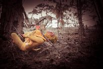 Chàng trai 9X hóa khỉ, chụp ảnh nude bảo vệ môi trường