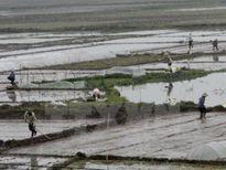 Gần 45% diện tích đã có nước gieo cấy vụ Đông Xuân