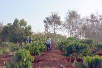 Hàng trăm người dân chặt phá rừng trái phép tại Gia Lai