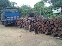 Gia Lai: Bộ Tư Lệnh Bộ đội Biên phòng bắt giữ số lượng lớn gỗ