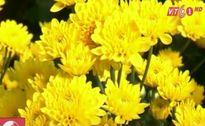 Hoa nở sớm, nhà vườn Đà Lạt thất thu