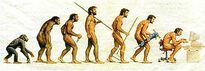 Tiến hóa hay tạo hóa