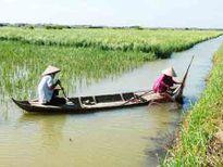 Hạn, mặn đe dọa vùng bán đảo Cà Mau