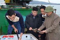 Xuất khẩu 9 tấn cá mú sang Hồng Kông qua đường biển
