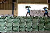 Sản lượng xuất khẩu gạo tăng khoảng 46% trong tháng Một