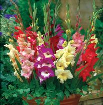 Nhiều loại hoa ở Huế rẻ chưa từng thấy
