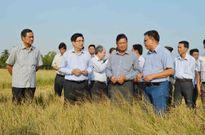 Hỗ trợ khẩn 120 tỷ đồng cho dân có lúa thiệt hại do hạn, mặn