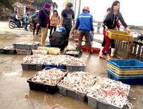 Tết vui được mùa cá cơm đen ở Quỳnh Dị