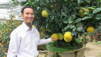 Những cây bưởi Tết gây sốt với giá cả trăm triệu