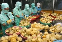 Ngành Nông nghiệp đặt mục tiêu xuất khẩu 40 tỷ USD vào năm 2020