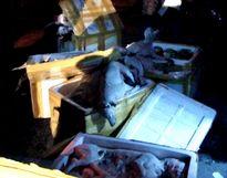Quảng Bình: Vận chuyển 300kg thịt chó không rõ nguồn gốc