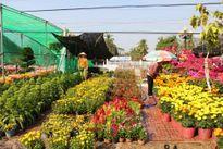 Rộn ràng chợ hoa xuân Tết Bính thân năm 2016