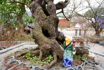 Cây đào rao giá 200 triệu đồng ở chợ hoa Tết xứ Thanh