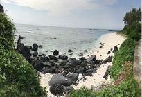Đảo An Bình - điểm đến của khách du xuân ở Lý Sơn