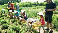 TP.HCM: Độc, lạ tour du lịch trồng rau sạch Củ Chi