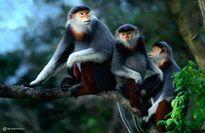 Khám phá nơi cứu hộ và nuôi dưỡng động vật hoang dã lớn nhất khu vực Đông Nam Á