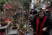 Nhộn nhịp chợ hoa ngày cận Tết Nguyên đán