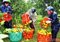 Nhiều mặt hàng nông sản thu tiền tỷ trong dịp Tết