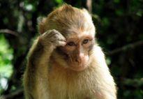 Năm Thân nói chuyện khỉ