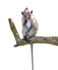 Vương quốc Khỉ ven đô
