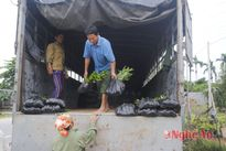 Nhộn nhịp trồng rừng vụ xuân
