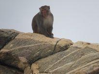 Tôi đi tìm khỉ nơi đảo khỉ
