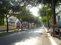 Phố Sài Gòn lãng mạn ngày đầu năm