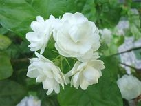 Những loại hoa tuyệt đối không đặt trên ban thờ