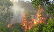 Lào Cai: Cháy lớn ở Vườn quốc gia Hoàng Liên