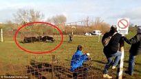 Tây Ban Nha: Bò tót hung hãn, húc gãy chân khán giả [VIDEO]