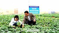 Nam Đinh nhân rộng ứng dụng nhà lưới trong canh tác rau màu
