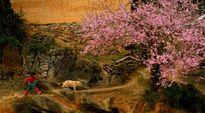 Dọc dài 12 mùa hoa nước Việt