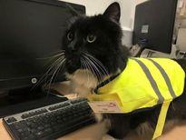 Ga tàu đặc cách thăng chức cho cô mèo có nhiều thành tích thi đua