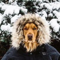 Chú chó nổi tiếng đi phượt qua 8 quốc gia