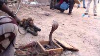 Hãi hùng kịch chiến đẫm máu của khỉ với động vật khác