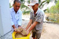 Hàng triệu nông dân xoay xở chống hạn mặn khốc liệt