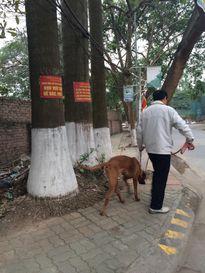 Chó dữ 'ngông nghênh' đi lại khắp Thủ đô
