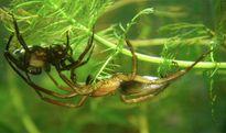 Những lý do khiến loài nhện đáng sợ nhưng thú vị (1)