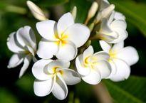 Top 10 loài hoa đẹp nhất thế giới