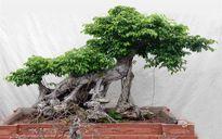 5 loại cây cảnh nên trồng để không khí nhà bạn luôn trong lành