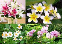 Hoa nào nên và không nên dâng cúng lên bàn thờ?