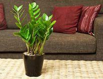 Cần vứt ngay những chậu cây trong nhà này nếu không muốn 'hại' con