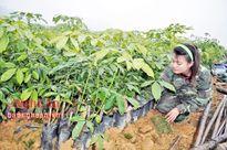 Hộ nghèo được hỗ trợ tham gia trồng rừng
