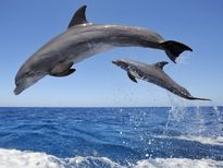 Mỹ xây dựng khu bảo tồn ven biển dành riêng cho cá heo