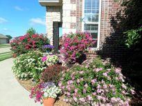 Ngắm vườn hoa đẹp như công viên của mẹ Việt trên đất Mỹ