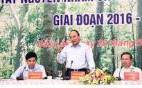 Thủ tướng: Quyết tâm khôi phục và phát triển rừng bền vững